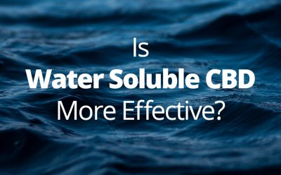 Is Water Soluble CBD More Effective Than CBD Oil? (Updated for 2020)